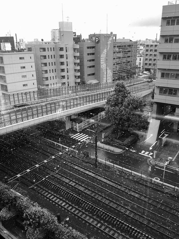 雨つづきの夏_a0003650_21203958.jpg