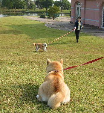'17,8,18(金)BBHへ1時間半のお散歩!_f0060461_05351964.jpg