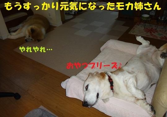f0121712_07173374.jpg