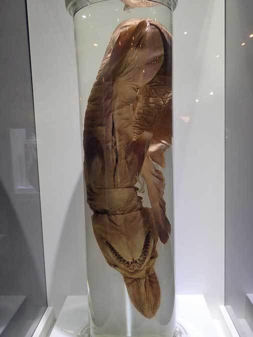 国立科学博物館 特別展「深海2017」へ行って来ました♪_b0355317_11310492.jpg