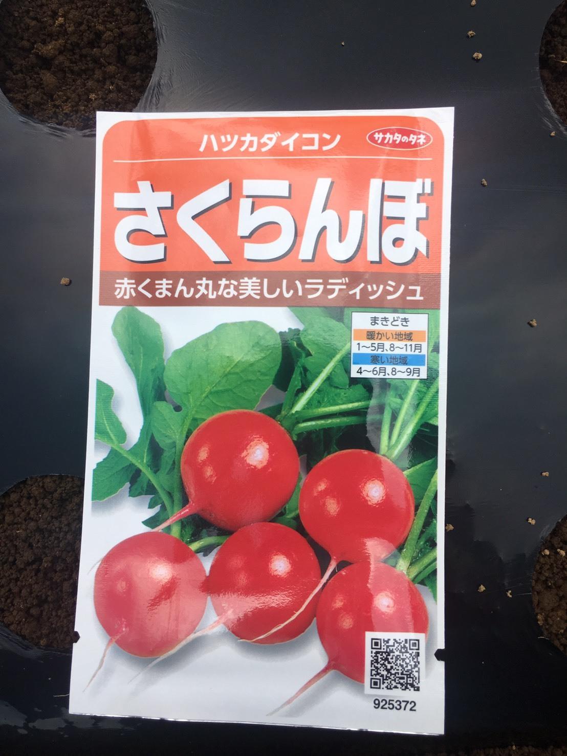 本日より 蕪 ほうれん草 ラディッシュの播種開始します_c0222448_12100086.jpg