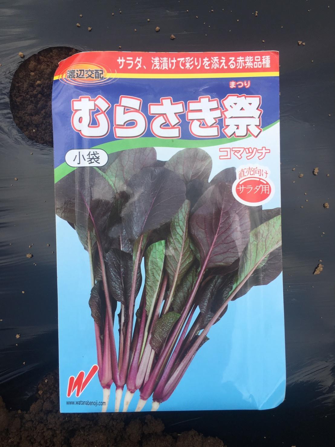本日より 蕪 ほうれん草 ラディッシュの播種開始します_c0222448_12105352.jpg