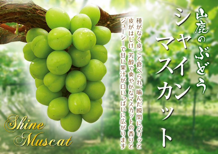 熊本ぶどう 社方園 第12回ぶどう祭り 前編_a0254656_20263549.jpg