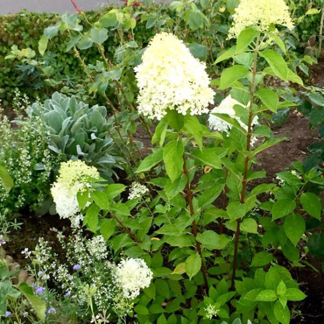 今週の庭と考え事_b0357031_11505849.jpg