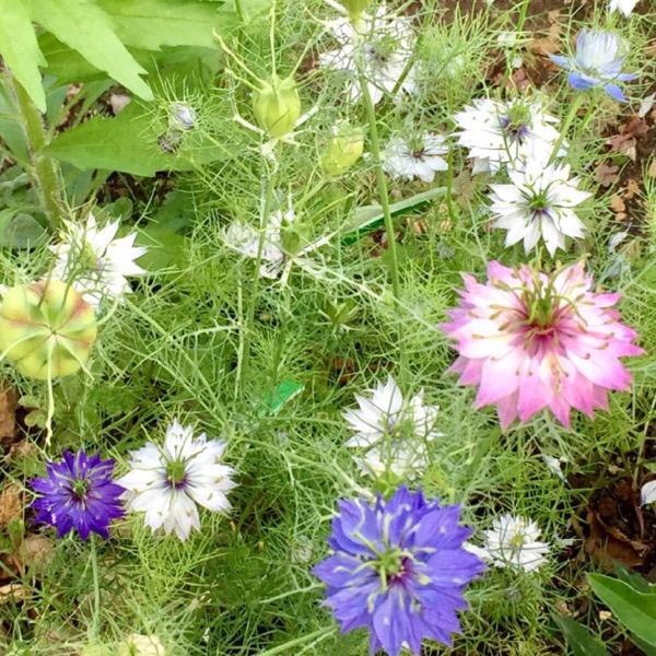 今週の庭と考え事_b0357031_11505862.jpg