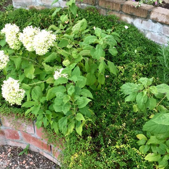 今週の庭と考え事_b0357031_11505954.jpg