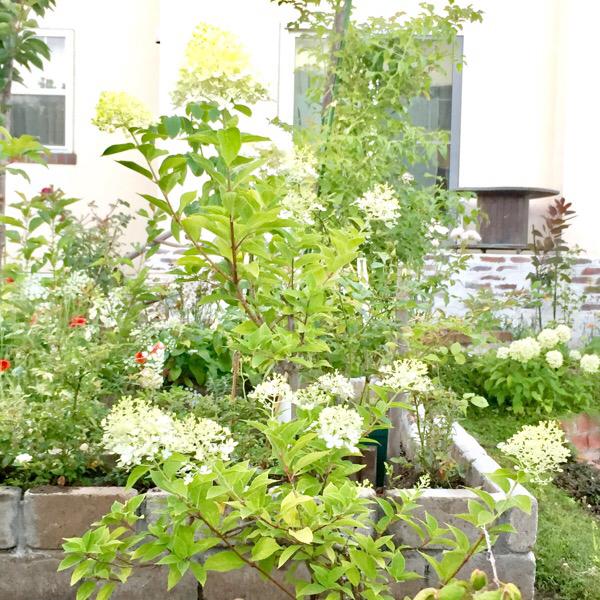 今週の庭と考え事_b0357031_11505959.jpg