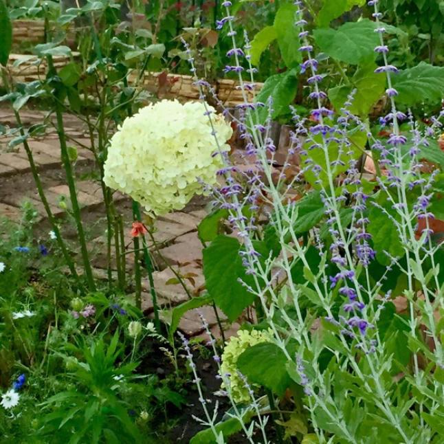 今週の庭と考え事_b0357031_11510042.jpg