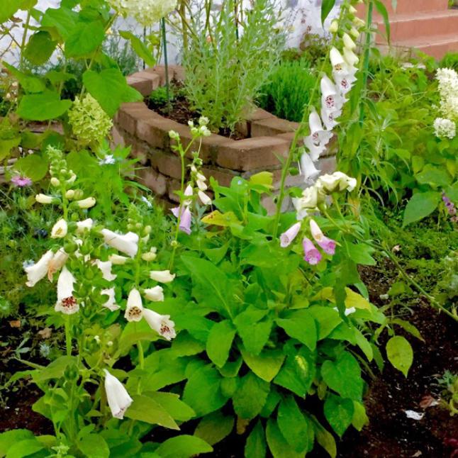 今週の庭と考え事_b0357031_11510152.jpg