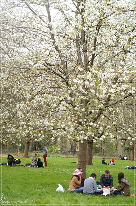 桜のソー公園*_f0151946_18194381.jpg
