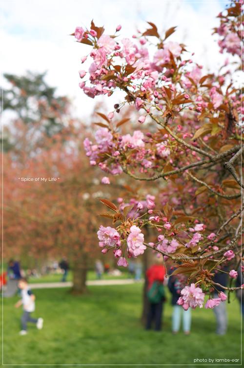 桜のソー公園*_f0151946_18264266.jpg