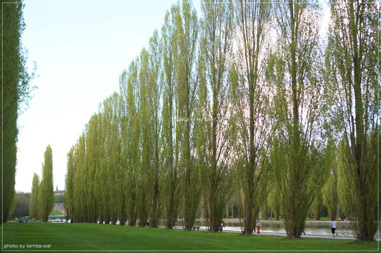 桜のソー公園*_f0151946_1827991.jpg