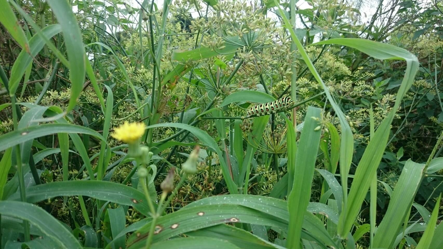 昨日播種した 畝 昨晩の豪雨で心配でした  結果セーフ!_c0222448_13540375.jpg