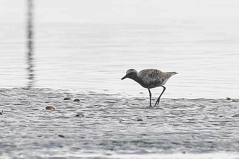 海で見た鳥さん~☆_f0368272_21392357.jpg