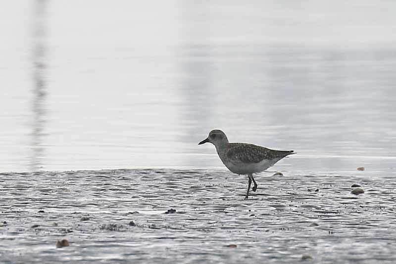海で見た鳥さん~☆_f0368272_21482285.jpg
