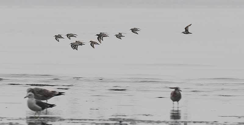 海で見た鳥さん~☆_f0368272_22001511.jpg