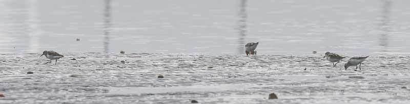 海で見た鳥さん~☆_f0368272_22003149.jpg
