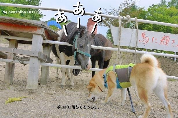 f0150377_20092367.jpg