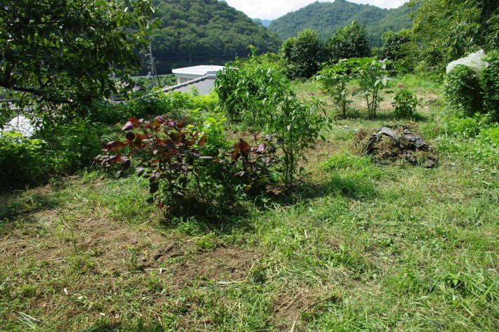 No  108  ひとり農作業(8月20日)_d0341514_20103007.jpg