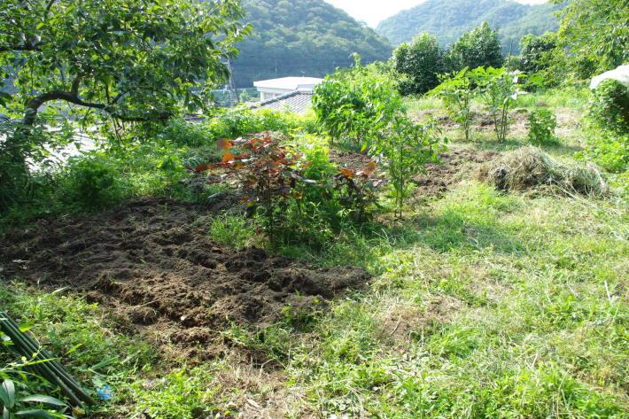 No  108  ひとり農作業(8月20日)_d0341514_20105229.jpg