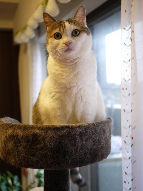 猫のお留守番 さくらちゃん編。_a0143140_22172716.jpg