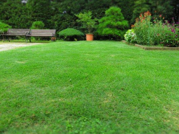 2017年8月27日 2回目の芝刈り作業_b0341140_16141918.jpg