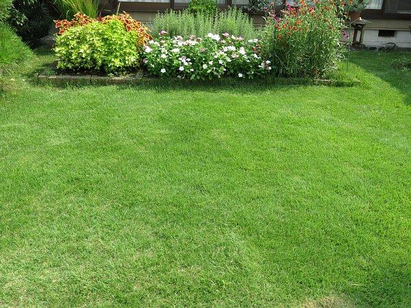 2017年8月27日 2回目の芝刈り作業_b0341140_16143025.jpg