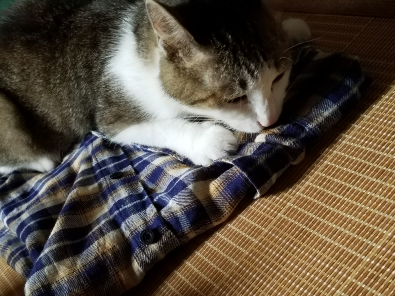 洗濯物と猫_b0328361_22123376.jpg