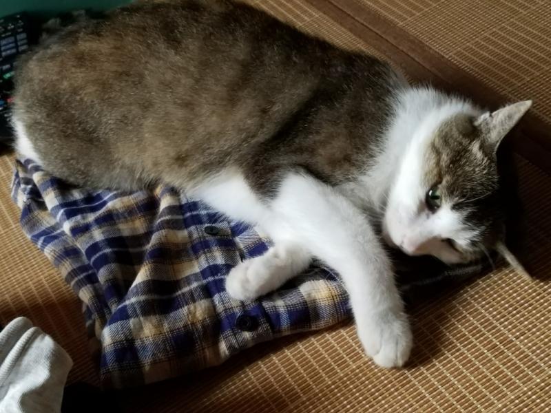 洗濯物と猫_b0328361_22123404.jpg