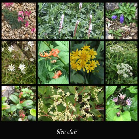 可愛い高山植物_b0270372_02031805.jpg