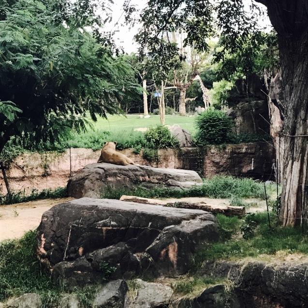 Night Zooとホームパーティー_d0343573_17595450.jpg