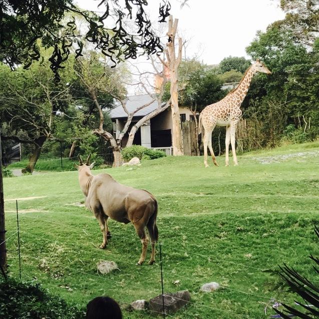 Night Zooとホームパーティー_d0343573_18012555.jpg