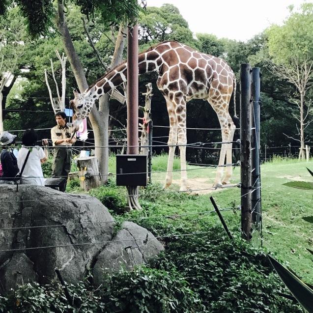 Night Zooとホームパーティー_d0343573_18020033.jpg