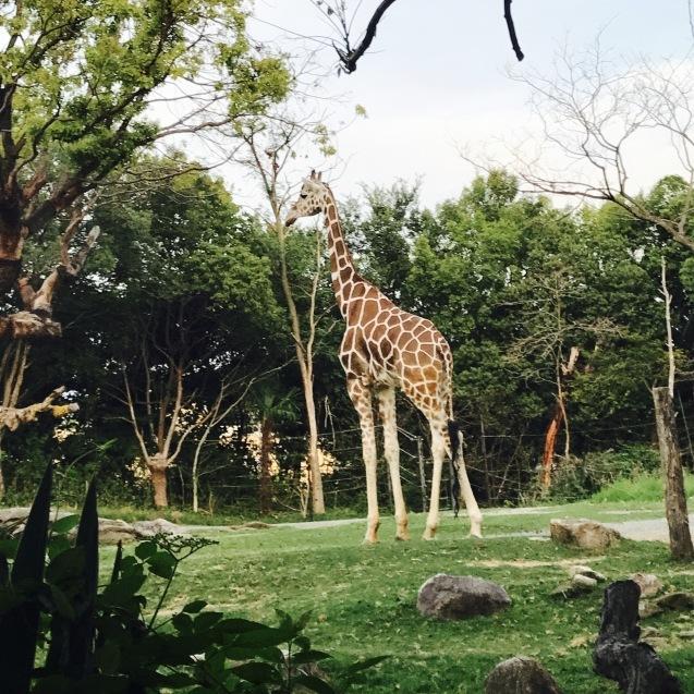 Night Zooとホームパーティー_d0343573_18025151.jpg