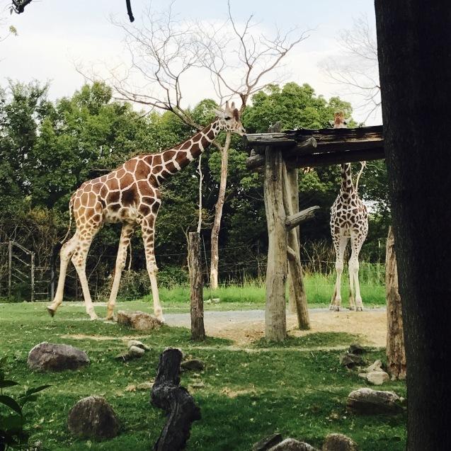 Night Zooとホームパーティー_d0343573_18041259.jpg