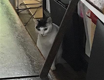 猫〜。_b0011075_19273472.jpg