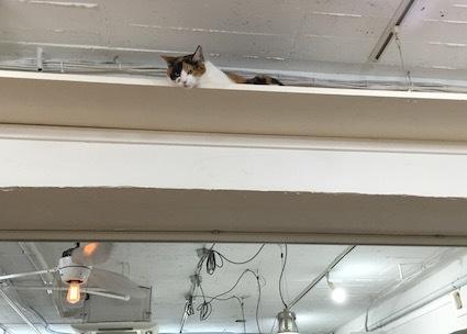 猫〜。_b0011075_19274286.jpg