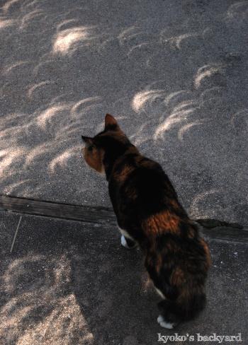 猫と楽しむ部分日食2017_b0253205_07251952.jpg
