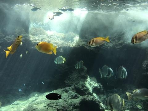 8月21日 美ら海水族館_a0317236_06143192.jpg