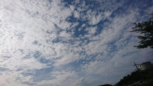 穏やかな火曜日。_d0362666_08210765.jpg