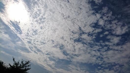 穏やかな火曜日。_d0362666_08212172.jpg