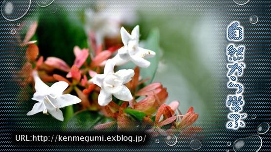 f0214467_09053532.jpg