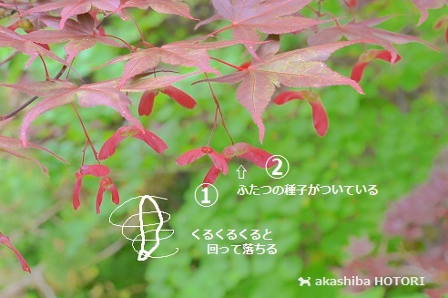 f0150377_20112104.jpg