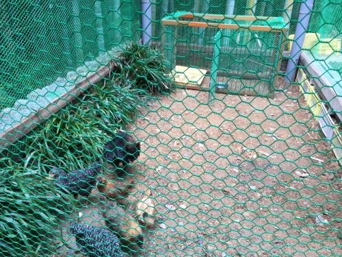鶏小屋_d0141987_15082607.jpg