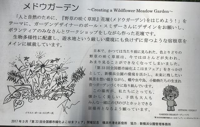 新横浜公園・メドウガーデン_c0124100_2312848.jpg