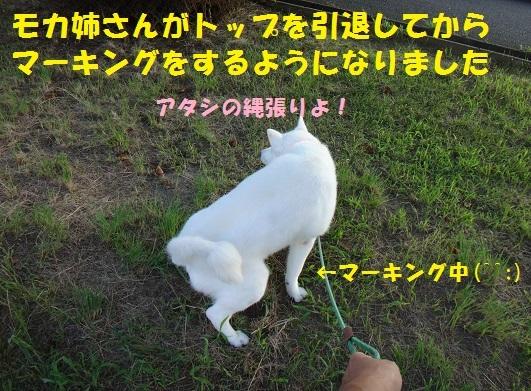 f0121712_11011357.jpg