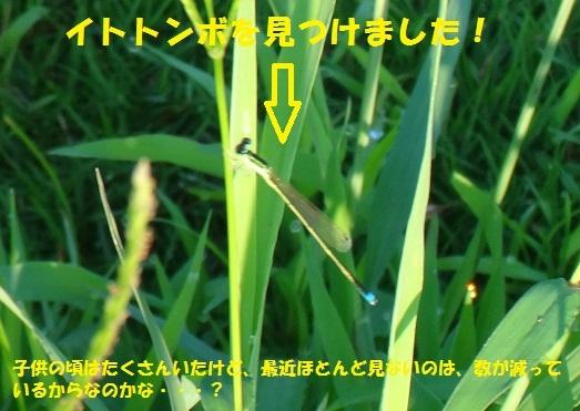 f0121712_11011639.jpg