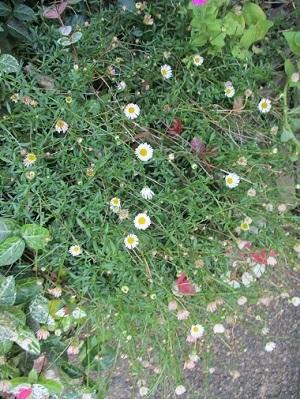 道端の花!_a0053480_07454896.jpg