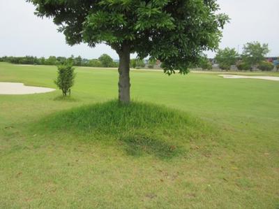 平成29年6月 ゴルフ場 管理作業 その4_d0338682_10285240.png