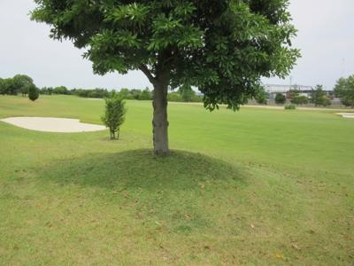 平成29年6月 ゴルフ場 管理作業 その4_d0338682_10293252.png